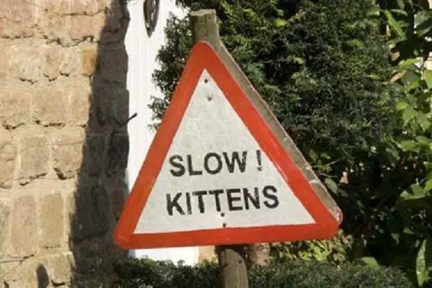 Slow kittens